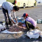 موضوع کودکان کار و خیابان و راه حلهای پاککنمحور